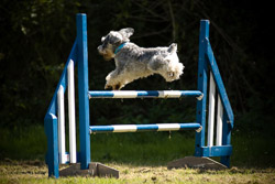 Dogagility Photography